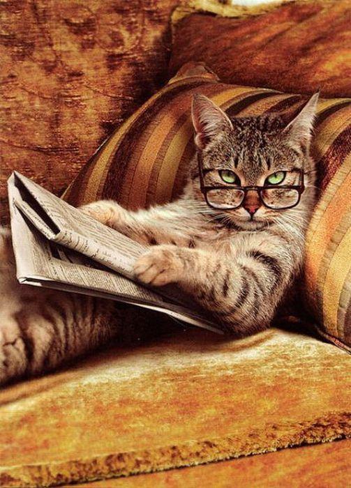cat-reading-paper.jpg